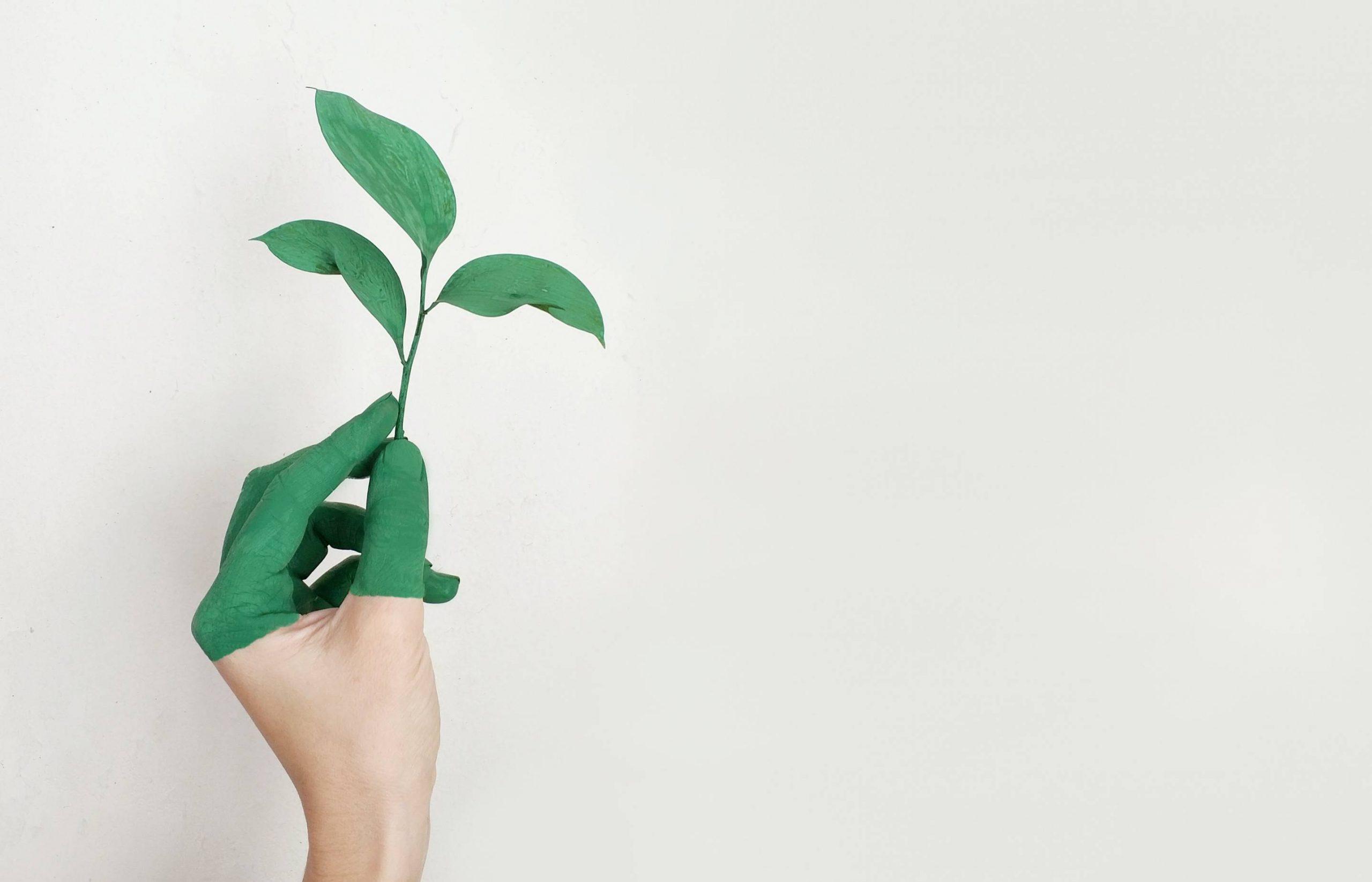 Greenwashing, o que é?