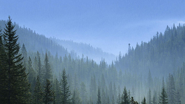 A Taiga é a maior floresta do mundo… e está a desaparecer