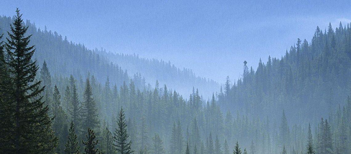 Floresta Taiga capa